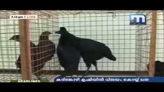 getlinkyoutube.com-വീട്ടുമുറ്റത്തെ കൃഷിവിശേഷങ്ങൾ....