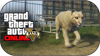 getlinkyoutube.com-GTA 5 PS4 Next Gen - Play As Mountain Lion,Dog,Wolf & More New Peyote Locations GTA 5 ! (GTA 5 PS4)