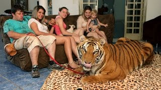 getlinkyoutube.com-Living With Tigers: Family Share Home With Pet Tigers