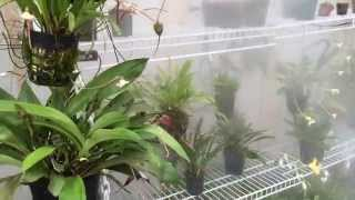 getlinkyoutube.com-DIY Greenhouse fogger system for Orchids, Carnivorous Plants and more!