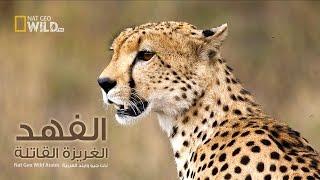 الفهد الغريزة القاتلة | نات جيو وايلد العربية | Nat Geo Wild Arabic