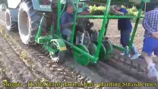 Sfoggia - ITALA Transplanter demo transplanting Strawberries - AMIA Ltd - www.agrimarktia.com