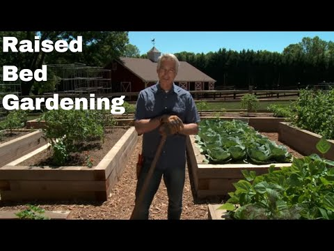 Learn the Benefits and Basics of Gardening in Raised Beds
