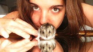 getlinkyoutube.com-MGTOW: On Hamsters and Chess - Patriarchy Tales 5
