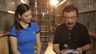 Alagang Magaling S7 EP10   OFF COLOR RACING PIGEONS  Jaime Lim