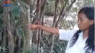 getlinkyoutube.com-Bocah SD Tangkap 4 Tuyul, Ribuan Warga Prambanan Geger