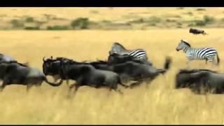 هيبا سفاري – كينيا 2015   HIPA Safari – Kenya 2015
