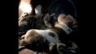 kitty porn.3gp