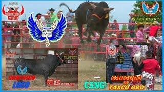 ESPECTACULAR el CIENTÍFICO LOCO de los toros DIVINOS DERRIBANDO AL (CANGURO D TAXCO GRO