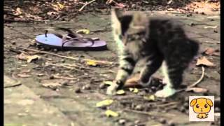getlinkyoutube.com-体の不自由な子猫を見守る犬