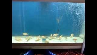 getlinkyoutube.com-Fish In A Barrel - Week13