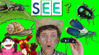 getlinkyoutube.com-What Do You See? Song with Matt | Bugs Part 2 | Learn English Kids