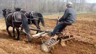 getlinkyoutube.com-Canadian Horses - Disc Harrowing at Ross Farm