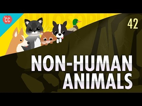 Non-Human Animals: Crash Course Philosophy #42