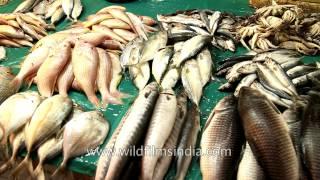 getlinkyoutube.com-As noisy as a fish market in here: Chennai fish wholesale market