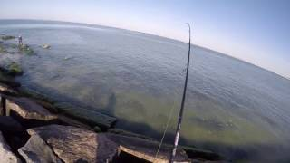 getlinkyoutube.com-Long Island Jetty Bluefish
