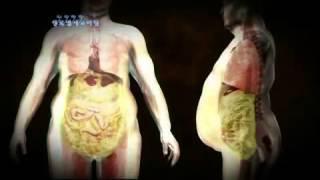 getlinkyoutube.com-뱃살의진실 생노병사의 비밀