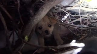 getlinkyoutube.com-Saving five orphaned puppies - watch until the end for an amazing transformation!
