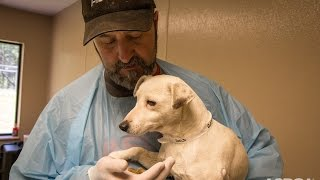 getlinkyoutube.com-Traumatized Puppy Mill Dog Makes an Amazing Recovery