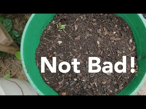 Low Infrastructure Compost Pile and Gardens Update