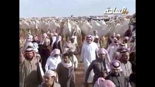 #جديد_الساحة 1436 | العالميات | مسيرة منقية / عبدالله بن دلمخ آل محمد السبيعي