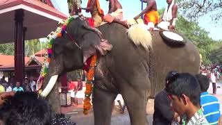getlinkyoutube.com-Chulliparambil Vishnusankar Elephant at Cheeram kulangara pooram