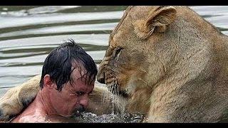 getlinkyoutube.com-CRAZY lion attacks human - Must see!