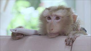 getlinkyoutube.com-เปิดโปง!! ความลับของน้องลิง