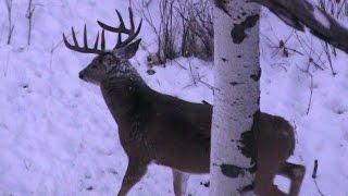 getlinkyoutube.com-The most AMAZING Deer Hunting Video EVER!!! HD