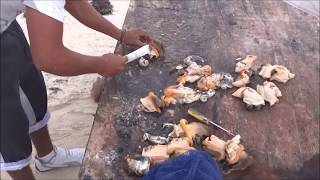 Conch Shell - releasing the meat