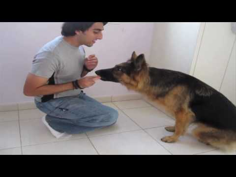Dog Trick Tutorial: