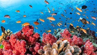getlinkyoutube.com-Austraila's Great Barrier Reef