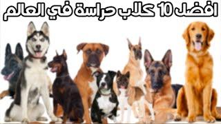 getlinkyoutube.com-افضل 10 كلاب حراسة في مصر