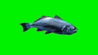 getlinkyoutube.com-Green Screen Fish Swim - Footage PixelBoom