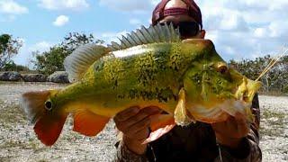 getlinkyoutube.com-BIG PEACOCK BASS Fishing FLORIDA
