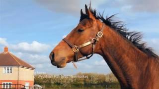getlinkyoutube.com-Whinny'ing horse