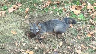 getlinkyoutube.com-First Week Trapping 2014-2015