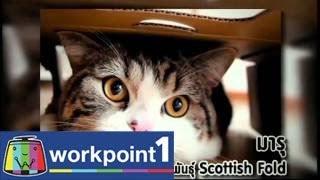 getlinkyoutube.com-แฟนพันธุ์แท้ 2014_21 มี.ค. 57 (คนรักแมว)