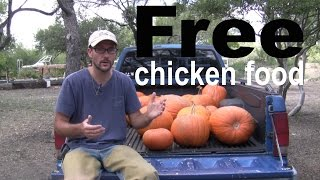getlinkyoutube.com-Free Chicken Food Every Autumn