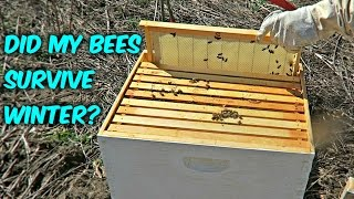 Did My Bees Survive Winter?