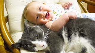 getlinkyoutube.com-Cute Cats and Dogs Love Babies Compilation 2015