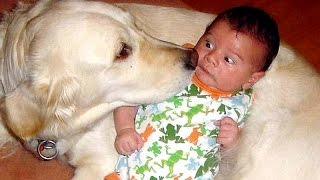 Funny ANIMALS - The World's best entertainment - Funny animal compilation
