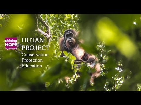 Shining Hope accomplishments with HUTAN: orangutan conservation