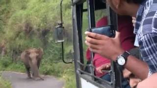 getlinkyoutube.com-Elephant attack in Gavi, Kerala