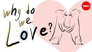 Zašto volimo?