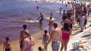 getlinkyoutube.com-فيديو مذهل - شاب يصطاد سمكة قرش وتولد على الشاطيء!
