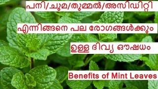 getlinkyoutube.com-പനി/ചുമ/അസിഡിറ്റി/തുമ്മല് ഇവക്കു  ഉത്തമ ഔഷധം / Benefits of Mint leaves