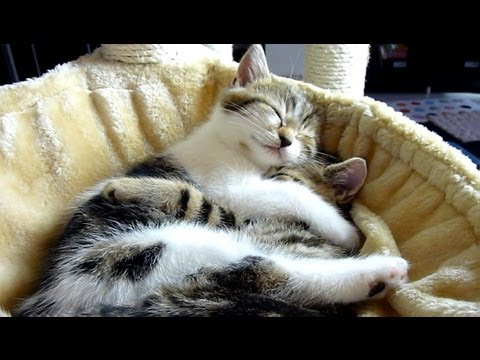 Cutest Cat Moments. Top 20 Kitten and Cat Hugs