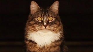 getlinkyoutube.com-My Cat is plotting to kill me! Navi/Cupquake Edition