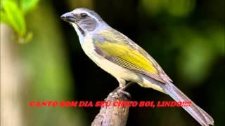 getlinkyoutube.com-trinca ferro BOM DIA SEU CHICO BOI, lindo!!! vídeo de 1 hora!!!